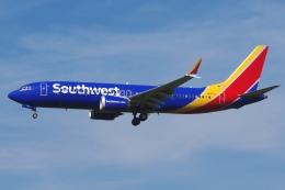 zettaishinさんが、ブラッドレー国際空港で撮影したサウスウェスト航空 737-8-MAXの航空フォト(飛行機 写真・画像)