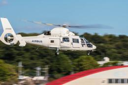 NCT310さんが、調布飛行場で撮影したエアバス・ヘリコプターズ・ジャパン AS365N2 Dauphin 2の航空フォト(飛行機 写真・画像)