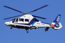 Echo-Kiloさんが、札幌飛行場で撮影したオールニッポンヘリコプター AS365N3 Dauphin 2の航空フォト(飛行機 写真・画像)
