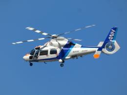 宮城の航空ファンさんが、仙台空港で撮影したオールニッポンヘリコプター AS365N2 Dauphin 2の航空フォト(飛行機 写真・画像)