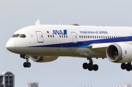 レガシィさんが、福岡空港で撮影した全日空 787-8 Dreamlinerの航空フォト(飛行機 写真・画像)