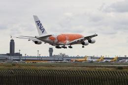 kan787allさんが、成田国際空港で撮影した全日空 A380-841の航空フォト(飛行機 写真・画像)