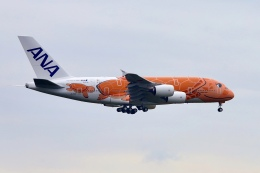 AkiChup0nさんが、成田国際空港で撮影した全日空 787-8 Dreamlinerの航空フォト(飛行機 写真・画像)