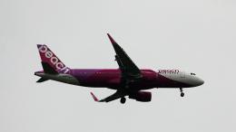 captain_uzさんが、成田国際空港で撮影したピーチ A320-214の航空フォト(飛行機 写真・画像)