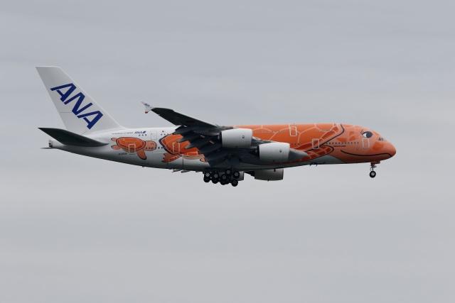 黒柴さんが、成田国際空港で撮影した全日空 A380-841の航空フォト(飛行機 写真・画像)