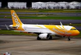 SFJ_capさんが、成田国際空港で撮影したスクート A320-232の航空フォト(飛行機 写真・画像)