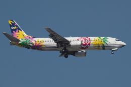 Deepさんが、羽田空港で撮影したスカイネットアジア航空 737-46Mの航空フォト(飛行機 写真・画像)