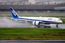 まいけるさんが、羽田空港で撮影した全日空 787-8 Dreamlinerの航空フォト(飛行機 写真・画像)