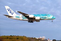 シグナス021さんが、成田国際空港で撮影した全日空 A380-841の航空フォト(飛行機 写真・画像)