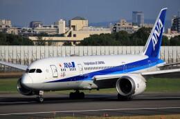 T.Sazenさんが、伊丹空港で撮影した全日空 787-8 Dreamlinerの航空フォト(飛行機 写真・画像)