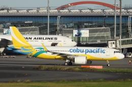 チャレンジャーさんが、羽田空港で撮影したセブパシフィック航空 A320-271Nの航空フォト(飛行機 写真・画像)