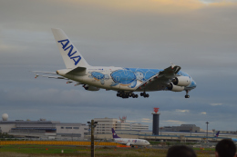 まっちゃんさんが、成田国際空港で撮影した全日空 A380-841の航空フォト(飛行機 写真・画像)