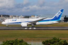 A.Tさんが、伊丹空港で撮影した全日空 787-8 Dreamlinerの航空フォト(飛行機 写真・画像)