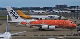 Rsaさんが、成田国際空港で撮影した全日空 A380-841の航空フォト(飛行機 写真・画像)