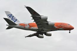 アルビレオさんが、成田国際空港で撮影した全日空 A380-841の航空フォト(飛行機 写真・画像)