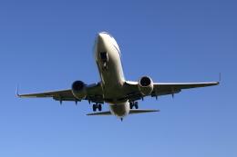 ▲®さんが、伊丹空港で撮影した全日空 737-881の航空フォト(飛行機 写真・画像)