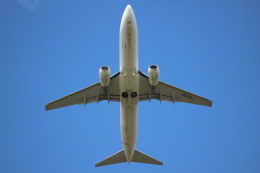 jaraakiさんが、旭川空港で撮影した日本航空 737-846の航空フォト(飛行機 写真・画像)