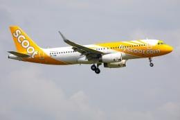 TIA spotterさんが、成田国際空港で撮影したスクート A320-232の航空フォト(飛行機 写真・画像)