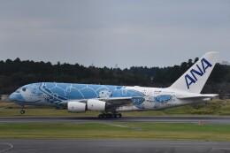PIRORINGさんが、成田国際空港で撮影した全日空 A380-841の航空フォト(飛行機 写真・画像)