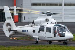 みぐさんが、東京ヘリポートで撮影したエアバス・ヘリコプターズ・ジャパン AS365N2 Dauphin 2の航空フォト(飛行機 写真・画像)