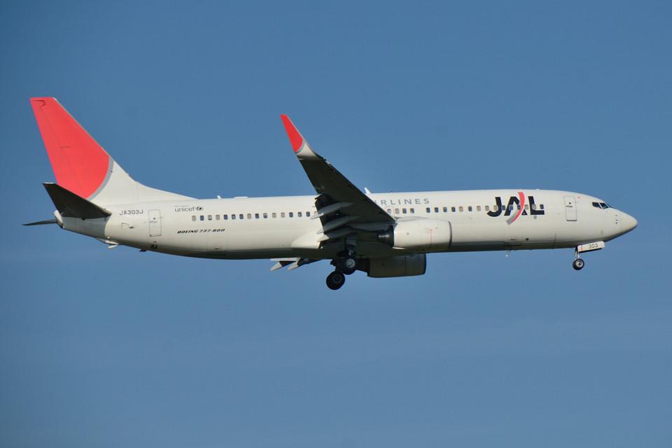 パンダさんの日本航空 Boeing 737-800 (JA303J) 航空フォト