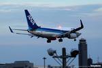 marbomitsuさんが、成田国際空港で撮影した全日空 737-781の航空フォト(写真)