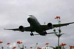 アイスコーヒーさんが、福岡空港で撮影した全日空 787-8 Dreamlinerの航空フォト(飛行機 写真・画像)