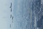 Hottyさんが、岐阜基地で撮影した航空自衛隊 C-1FTBの航空フォト(写真)
