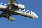 まっつーさんが、羽田空港で撮影した全日空 787-8 Dreamlinerの航空フォト(写真)