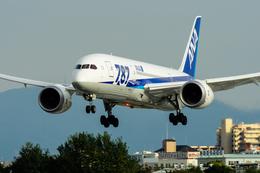 うえぽんさんが、伊丹空港で撮影した全日空 787-8 Dreamlinerの航空フォト(写真)