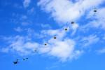 パンダさんが、入間飛行場で撮影した航空自衛隊 C-1の航空フォト(写真)