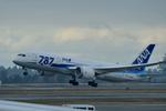 santaさんが、シアトル タコマ国際空港で撮影した全日空 787-8 Dreamlinerの航空フォト(写真)