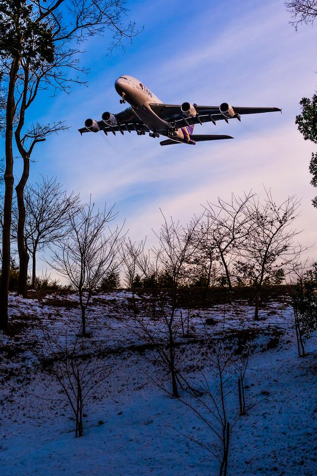 ヒットさんが、成田国際空港で撮影したタイ国際航空 A380-841の航空フォト(飛行機 写真・画像)