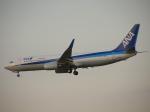 chappyさんが、伊丹空港で撮影した全日空 737-881の航空フォト(写真)