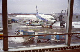 ニンニンさんが、釧路空港で撮影した全日空 737-281/Advの航空フォト(飛行機 写真・画像)