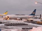 アイスコーヒーさんが、函館空港で撮影したマンダリン航空 737-8Q8の航空フォト(飛行機 写真・画像)