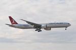 panchiさんが、成田国際空港で撮影したターキッシュ・エアラインズ 777-3F2/ERの航空フォト(飛行機 写真・画像)