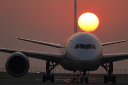 maruさんが、羽田空港で撮影した全日空 787-8 Dreamlinerの航空フォト(写真)