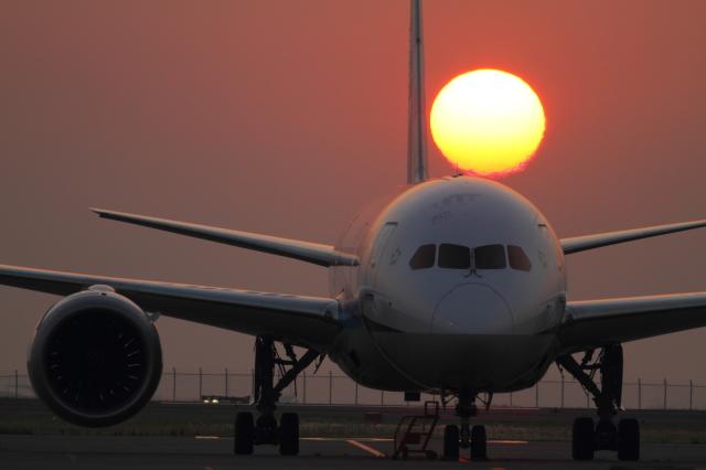 maruさんが、羽田空港で撮影した全日空 787-8 Dreamlinerの航空フォト(飛行機 写真・画像)