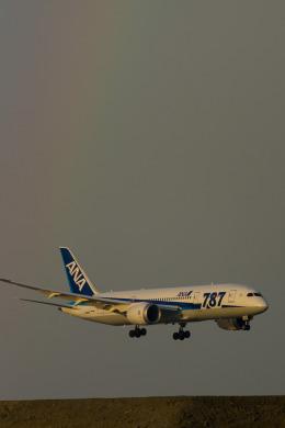 hentai_aさんが、羽田空港で撮影した全日空 787-8 Dreamlinerの航空フォト(飛行機 写真・画像)