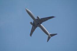 kitayocchiさんが、新千歳空港で撮影した全日空 737-881の航空フォト(飛行機 写真・画像)