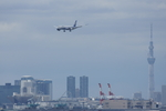xxxxxzさんが、羽田空港で撮影したボーイング 787-8 Dreamlinerの航空フォト(飛行機 写真・画像)