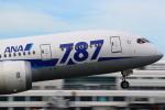 t!!!!!!さんが、鹿児島空港で撮影した全日空 787-8 Dreamlinerの航空フォト(写真)