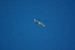 rjnsphotoclub-No.07さんが、静岡空港で撮影したオールニッポンヘリコプター EC135T2の航空フォト(飛行機 写真・画像)
