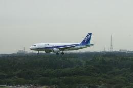 meijeanさんが、成田国際空港で撮影した全日空 A320-214の航空フォト(飛行機 写真・画像)