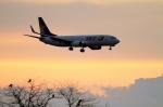 茨城空港 - Ibaraki Airport [IBR/RJAH]で撮影されたスカイマーク - Skymark Airlines [BC/SKY]の航空機写真