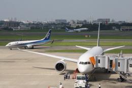 KKiSMさんが、伊丹空港で撮影した全日空 737-881の航空フォト(飛行機 写真・画像)